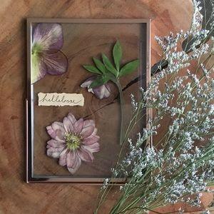 huge discount ab707 34db9 Pressed Flower Phone / MacBook Case / Home Decor